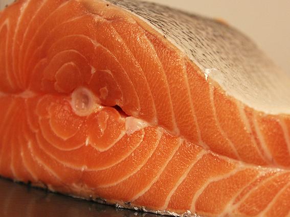 new salmon 1